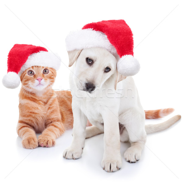 Natale animali cane cat cute pet Foto d'archivio © Stephanie_Zieber
