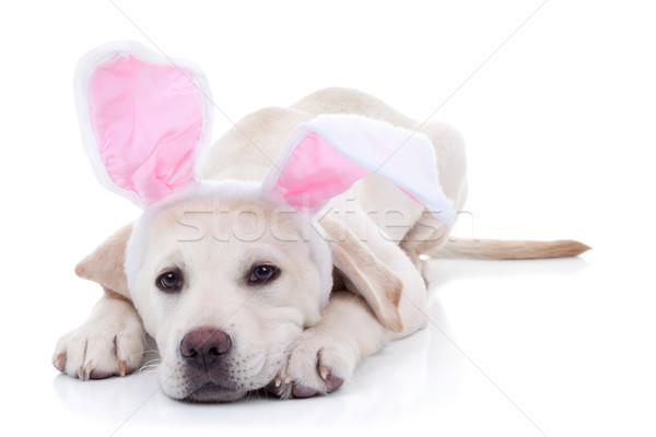 Easter Bunny Stock photo © Stephanie_Zieber