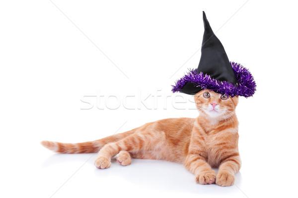 Stockfoto: Heks · kat · halloween · huisdier · kostuum · hoed