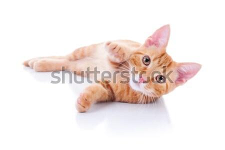 子猫 白 演奏 目 背景 楽しい ストックフォト © Stephanie_Zieber