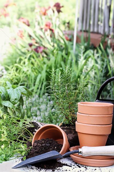 Herb Gardening Stock photo © StephanieFrey