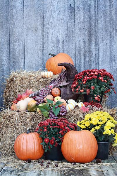 Cornucópia natureza morta chifre fora frutas legumes Foto stock © StephanieFrey