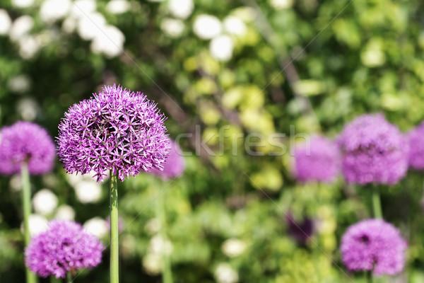 Bloei globale tuin selectieve aandacht bloemen wereldbol Stockfoto © StephanieFrey