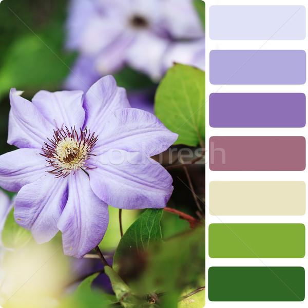 Foto stock: Cor · paleta · macro · violeta · flores · primavera