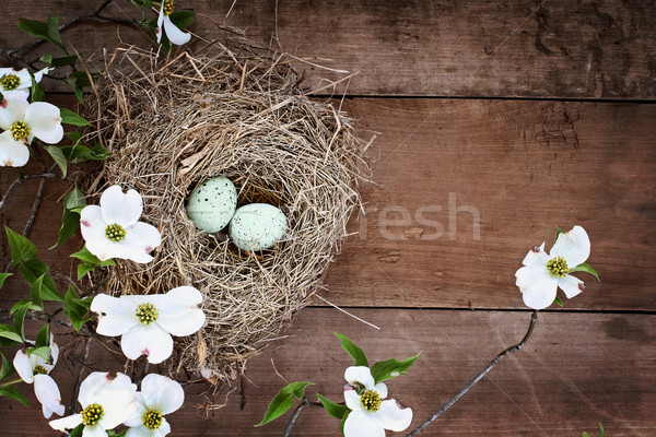 Bird Nest and Eggs with White Flowering Dogwood Blossoms Stock photo © StephanieFrey