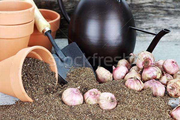 деревенский таблице цветок почвы лейка Сток-фото © StephanieFrey
