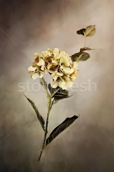 Boyalı dijital boyama güzel çiçek doğa Stok fotoğraf © StephanieFrey