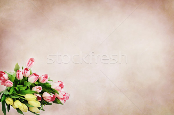 Bouquet tulipes belle soft chambre texte Photo stock © StephanieFrey