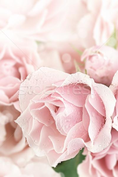 Pastel roze thee steeg mooie Stockfoto © StephanieFrey