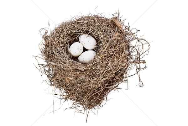 Stock foto: Isoliert · Vogelnest · Eier · weiß · Bild · erschossen