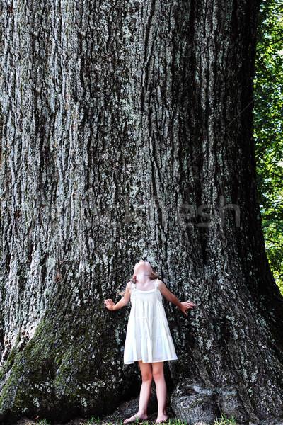Gyermek áll nagy fa kislány tölgyfa Stock fotó © StephanieFrey