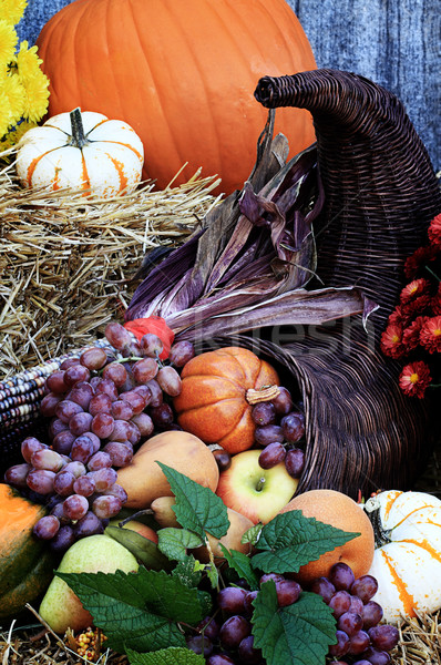 Cornucopia or Horn of Plenty Stock photo © StephanieFrey