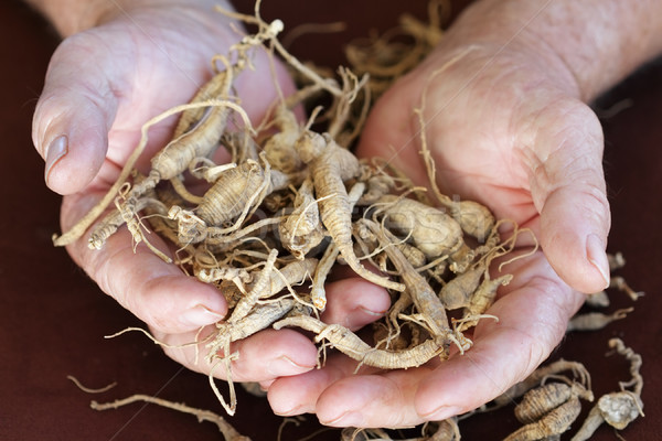 Ginseng Stock photo © StephanieFrey