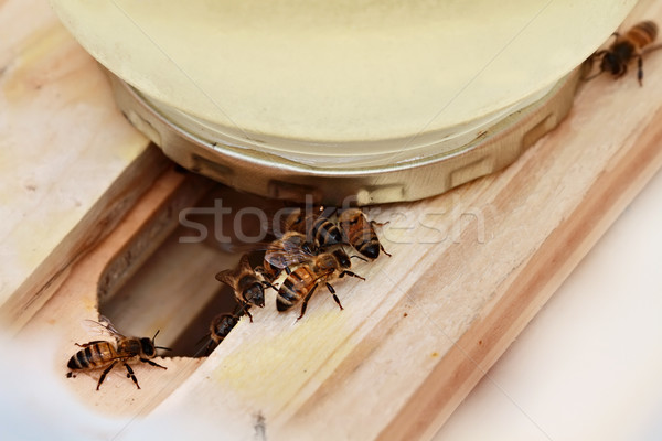 Bee Feeder Stock photo © StephanieFrey