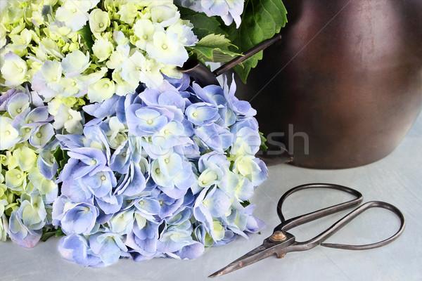 Cut Hydrangea and Gardening Supplies Stock photo © StephanieFrey
