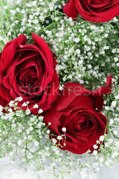 Vörös rózsák lélegzet sekély virág háttér rózsák Stock fotó © StephanieFrey