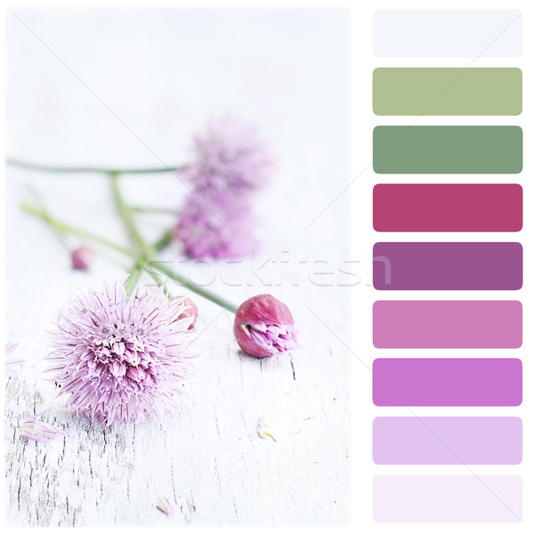 Fresh Chives and Color Palette Stock photo © StephanieFrey