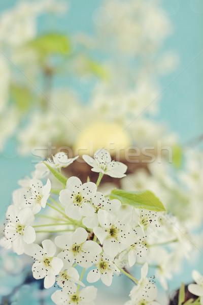 Boom bloesems mooie voorjaar nest ei Stockfoto © StephanieFrey