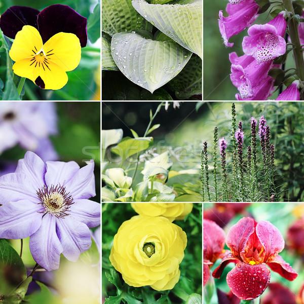Flores plantas colagem belo variedade colorido Foto stock © StephanieFrey