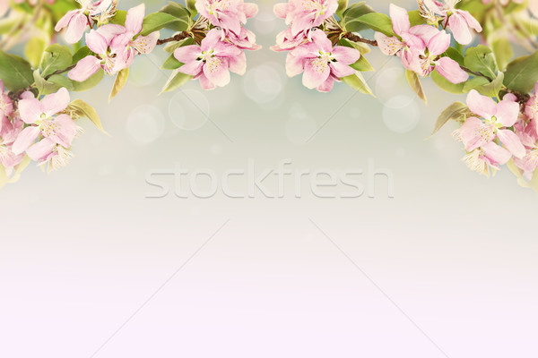 Beautiful Spring Blossoms Stock photo © StephanieFrey