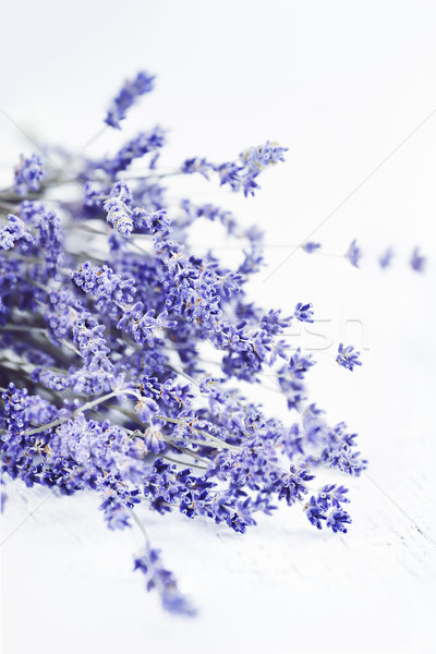 Lavender in High Key Stock photo © StephanieFrey