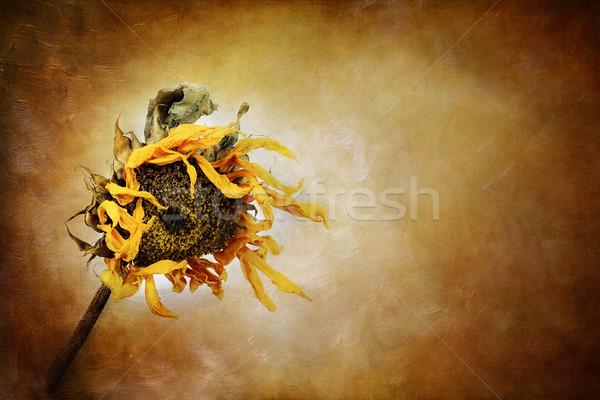 Autumn Beckons Stock photo © StephanieFrey