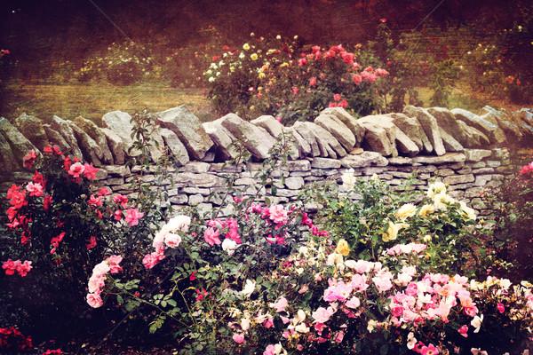 The Rose Garden Stock photo © StephanieFrey