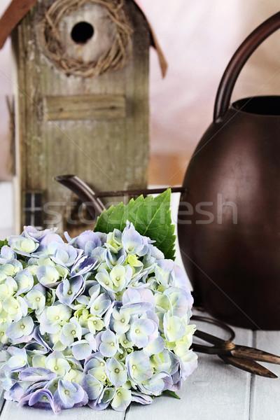 Hydrangea and Gardening Supplies Stock photo © StephanieFrey