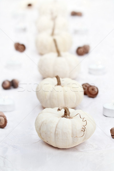 White Pumpkins in a Row Stock photo © StephanieFrey