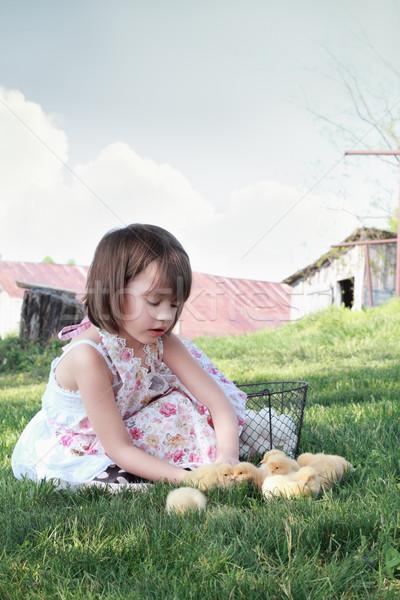 Сток-фото: ребенка · играет · цыплят · девочку · смотрят · молодые