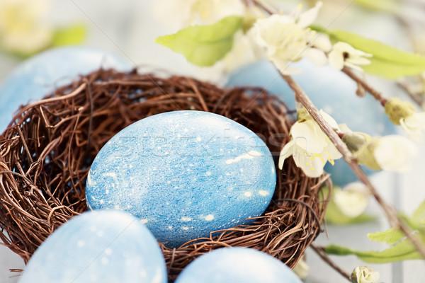 青 イースターエッグ 巣 イースターエッグ 自然 ストックフォト © StephanieFrey