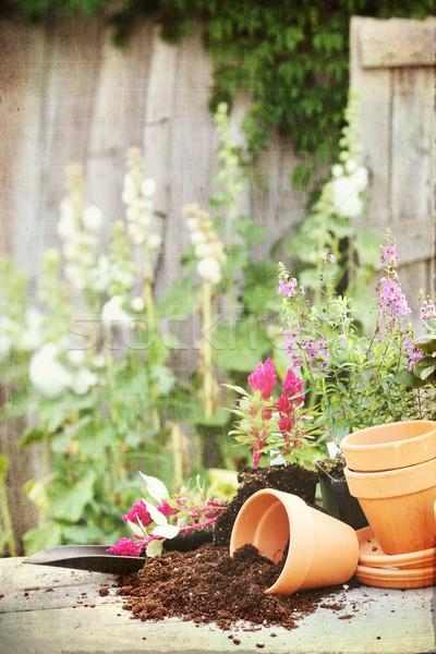 Flower Pots Stock photo © StephanieFrey