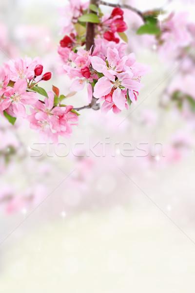 Spring Tree Blossoms Stock photo © StephanieFrey