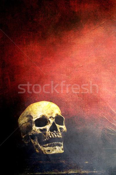 Skull with copy space Stock photo © StephanieFrey