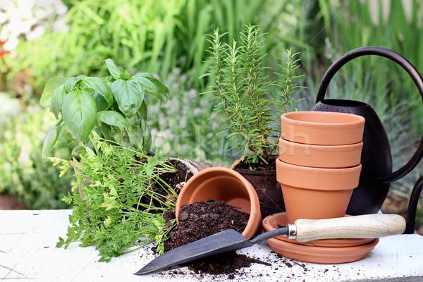 Herb Gardening and Trowel Stock photo © StephanieFrey