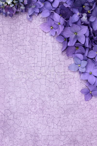 Roxo floral quarto cópia espaço flor flores Foto stock © StephanieFrey