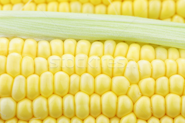 Stock photo: Macro of Corn on the Cob