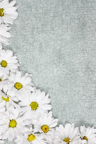 Daisy цветы зеленый комнату цветок дизайна Сток-фото © StephanieFrey