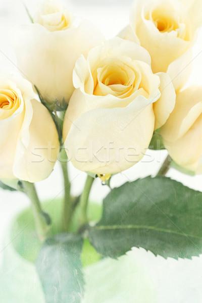 Long Stem Yellow Roses Stock photo © StephanieFrey