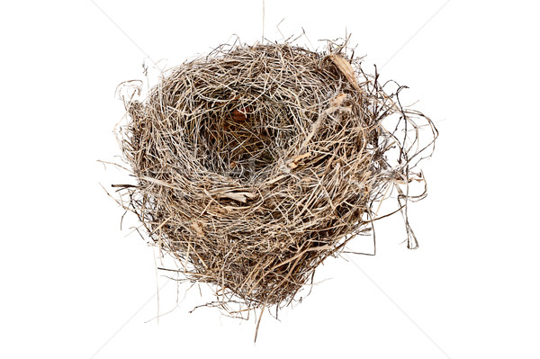 Isolated Empty Bird Nest  Stock photo © StephanieFrey