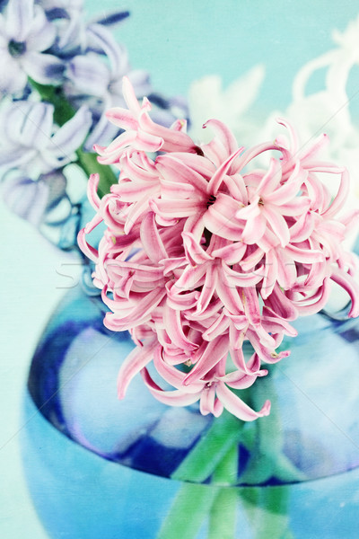 Textured Pink Hyacinth Stock photo © StephanieFrey