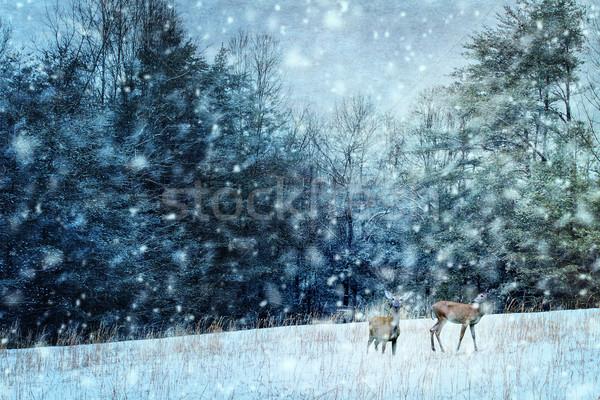 Deer in Winter Stock photo © StephanieFrey