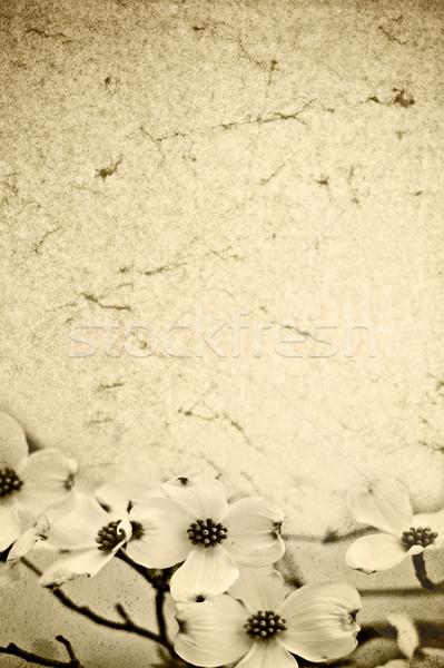 Dogwood Background Stock photo © StephanieFrey