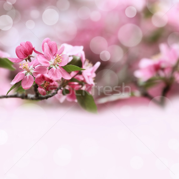 Spring Blossoms Stock photo © StephanieFrey
