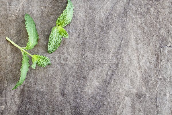 Mint Sprigs Stock photo © StephanieFrey