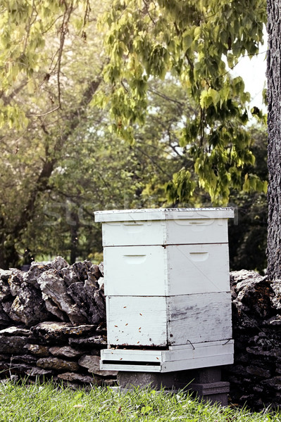 Bee Hive Stock photo © StephanieFrey