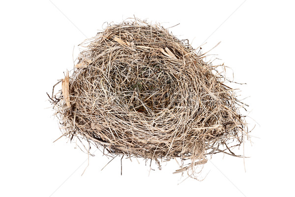 Isolated Empty Carolina Wren Bird Nest  Stock photo © StephanieFrey
