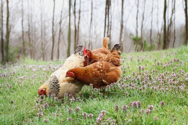Livre alcance orgânico primavera extremo raso Foto stock © StephanieFrey
