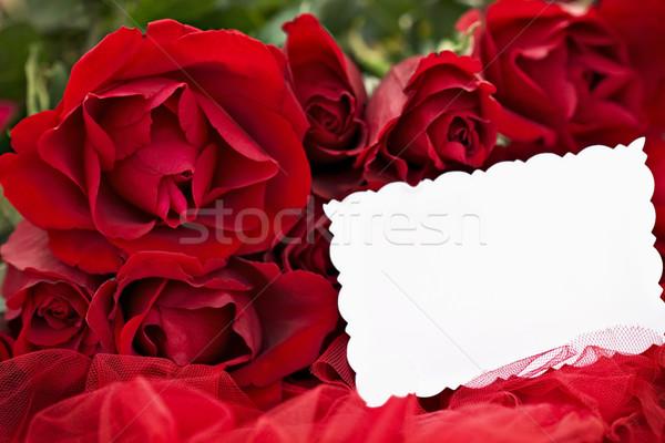 Güller boş kart güzel kırmızı gül kırmızı sığ Stok fotoğraf © StephanieFrey