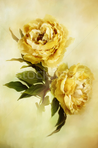 Painted Peonies Stock photo © StephanieFrey